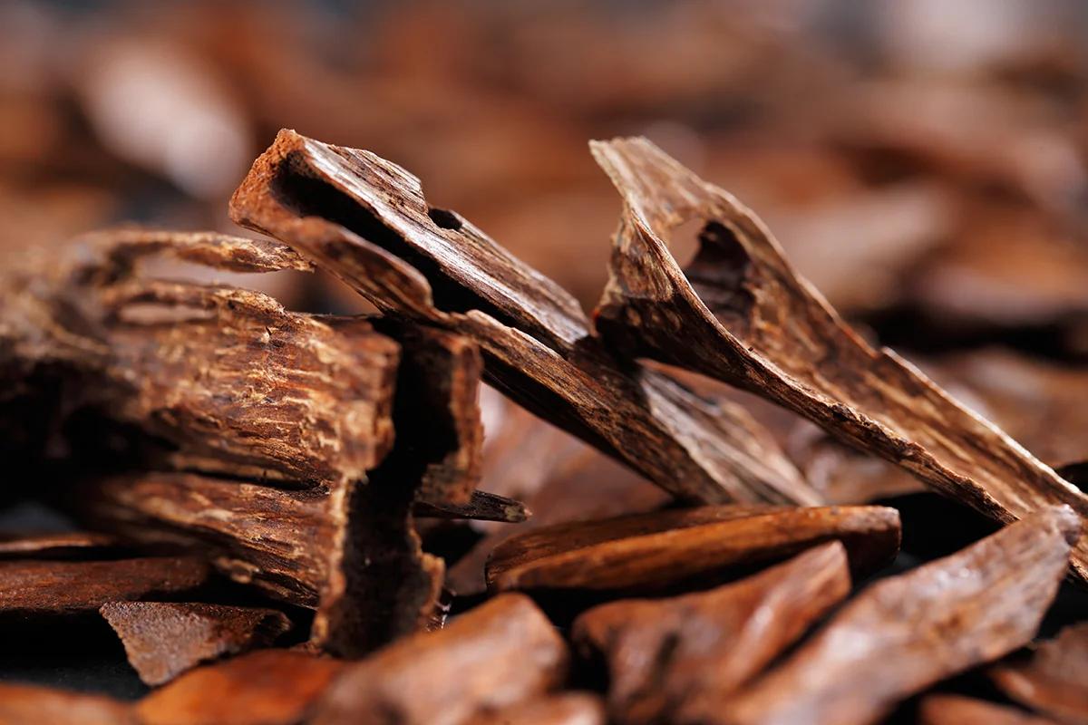 استخدامات خشب العود  عود العود