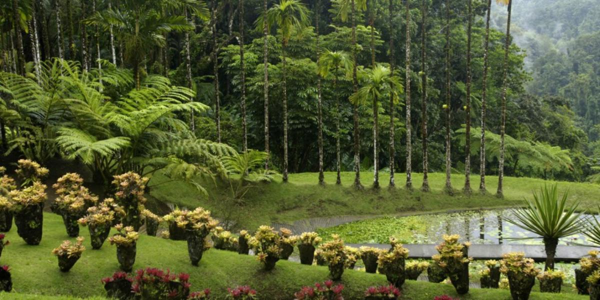 Jardin botanique de Balata