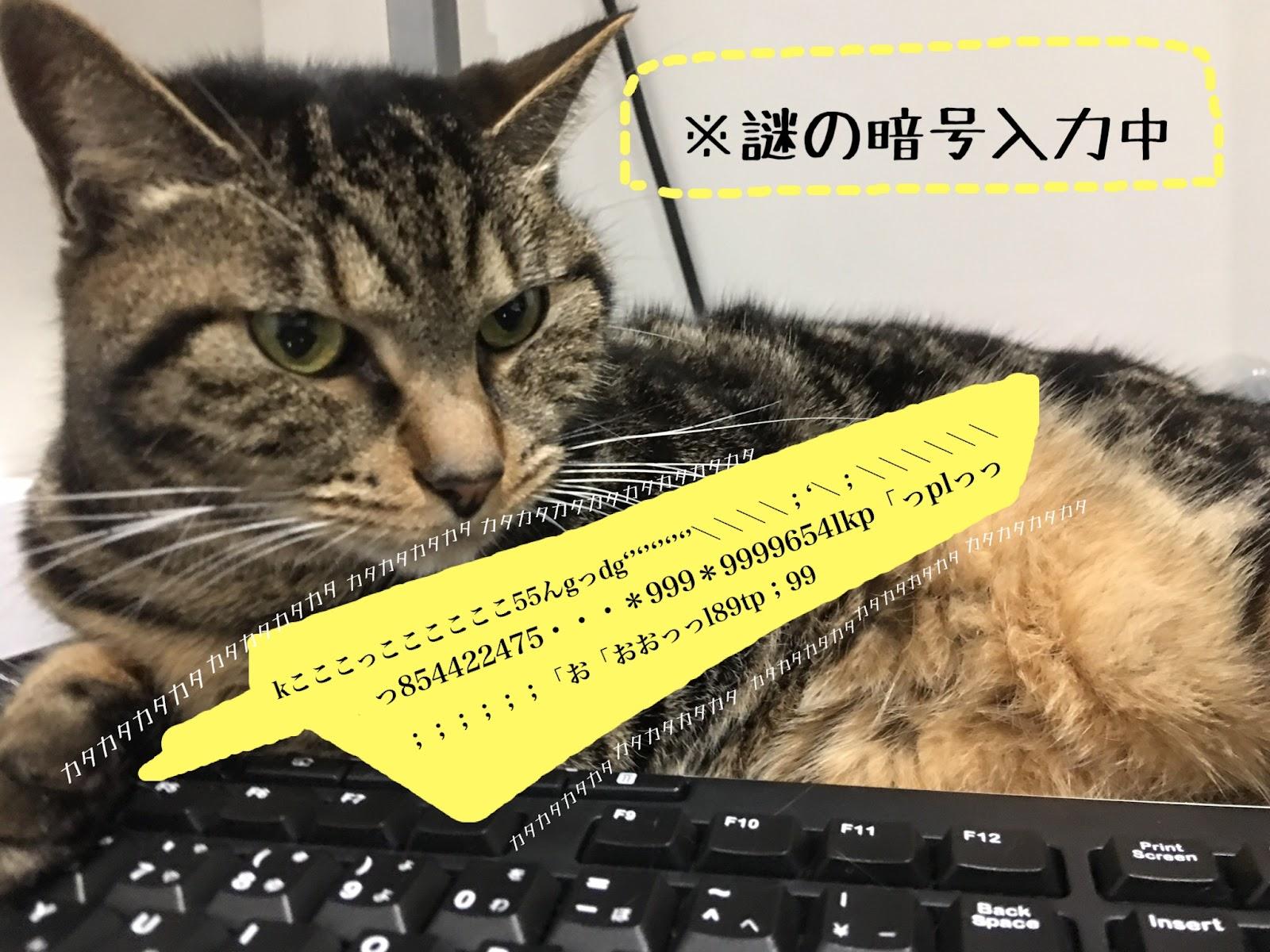 猫が邪魔をしてくる件