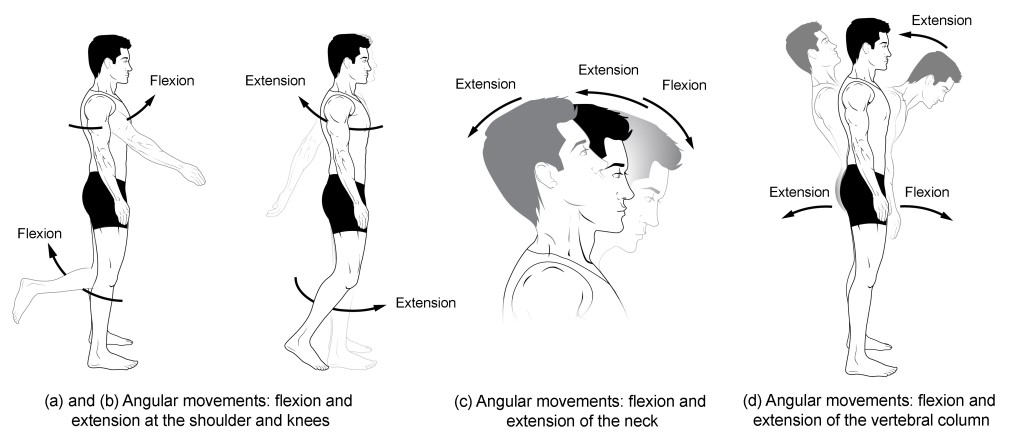 flexion rotation