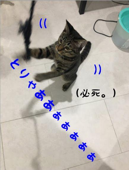 ネコが喜ぶ〇〇で遊ぶ!?