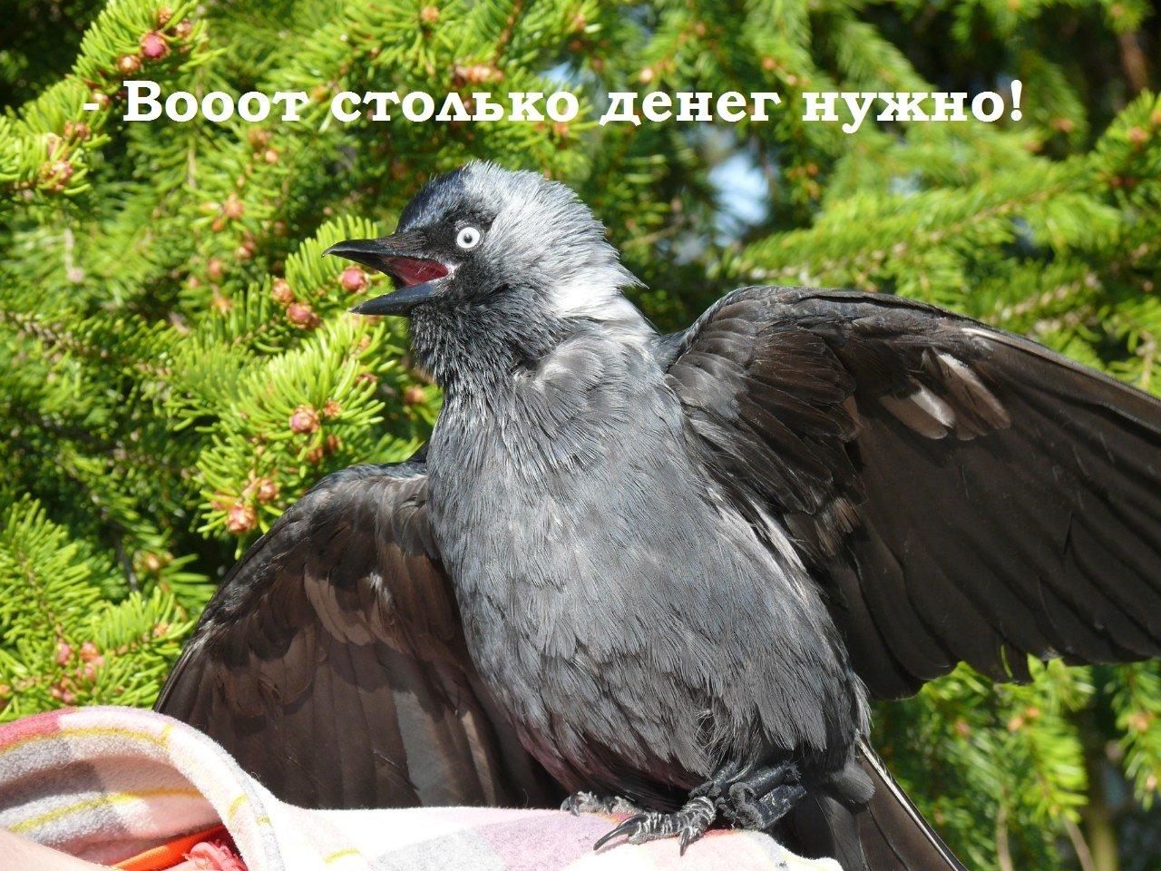 Мем из первого крауд-проекта «Вороньего Гнезда» был актуальным и в новом проекте. Изображение предоставлено Planeta.ru.
