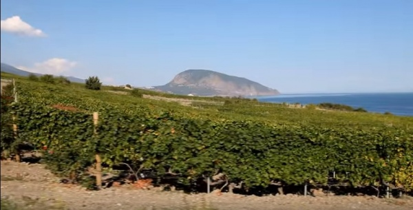 2057e01-vinogradniki-alekperova