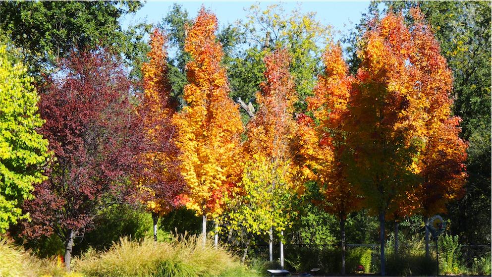 Autum Arboretum.jpg