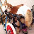 C:\Users\user\Desktop\Tomomi\2カット済み\中型犬L4輪\241.jpg