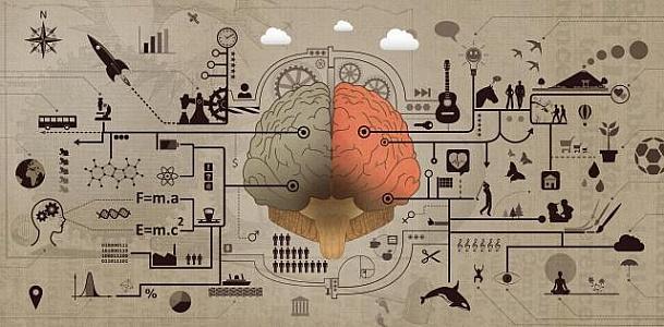 https://freerangestock.com/thumbnail/61058/learning-and-education--brain-functions-development-concept.jpg
