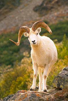 Ada Tertulis Wahyu 13 11 Binatang Bertanduk Dua Seperti Anak Domba