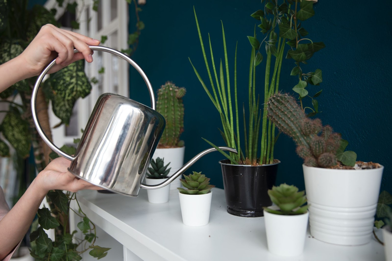 Image of person watering plants with a silver watering can.