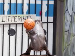 Image result for sea lion balancing ball