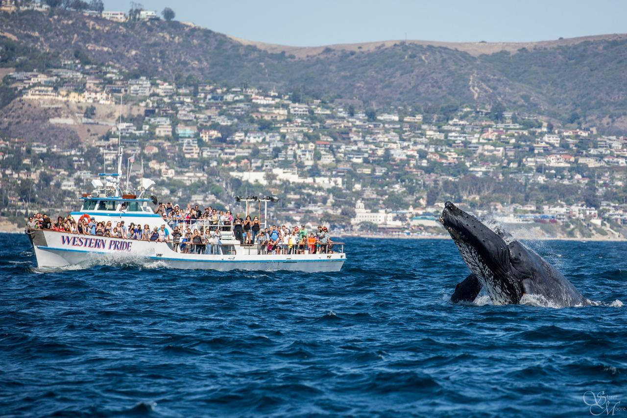 Humpback whale in ocean with boat full of people