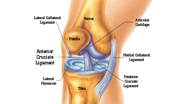 http://mahiclinic.com/torn-meniscus/