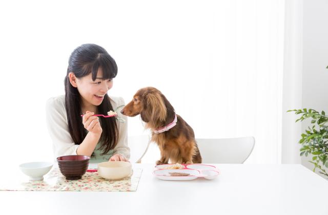 khi cứng cáp chó có thể ăn cơm