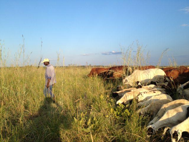 Herd walk 2.jpg