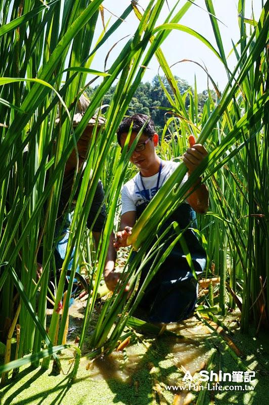 桃米休閒農業區20