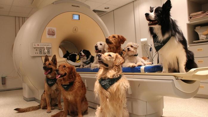 Собаки на томографії