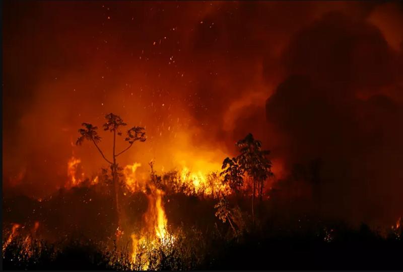 Pantanal e Amazônia sofreram com grandes queimadas em 2020. (Fonte: Reuters/ Amanda Perobelli/Reprodução)