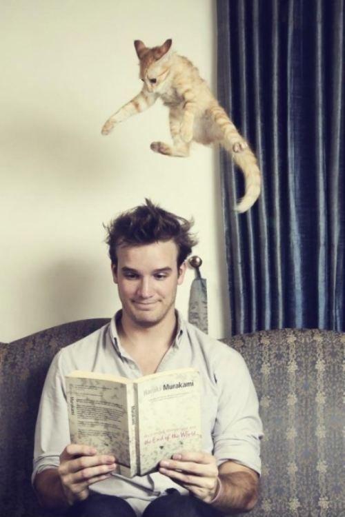 Cat problem.jpg