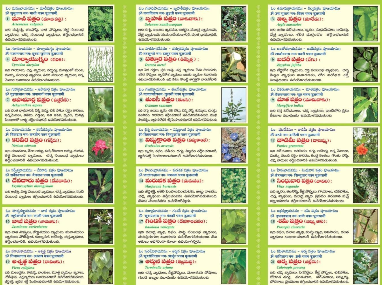 http://astrotelugu.com/Content/images/21patri.jpg