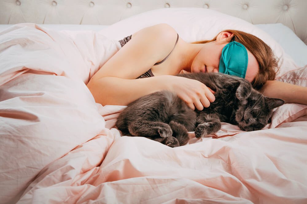 grey cat sleeping alongside woman in bed