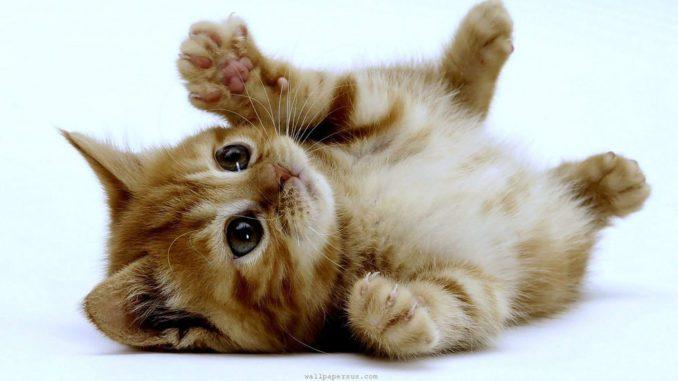 cat-678x381.jpeg