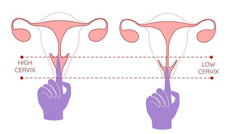 Xác định được độ dài ống âm đạo giúp chọn mua được cốc nguyệt san phù hợp