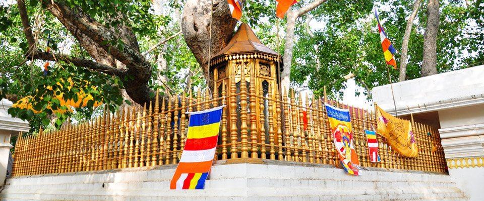 sri-maha-bodhiya-Anuradhapura – JK Travels