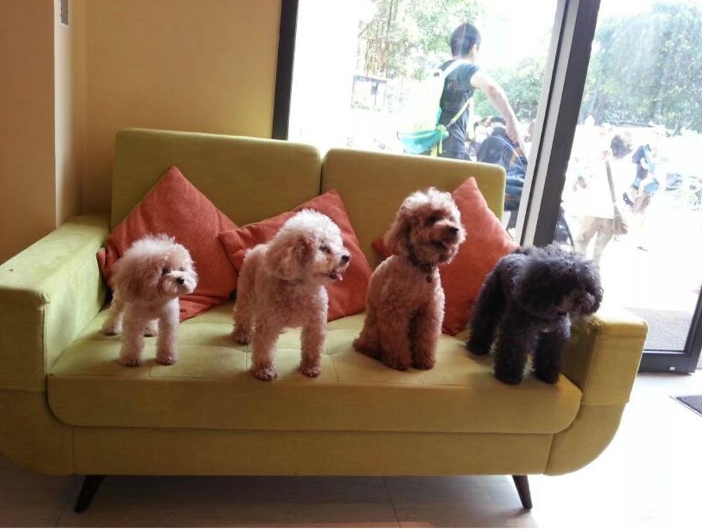 寵物友善酒店 海景渡假樂園 Pet friendly hotel hong kong
