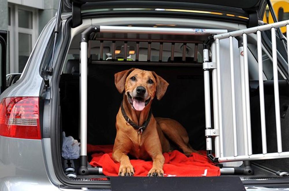 5 правил, яких варто дотримуватись для забезпечення безпеки домашніх тварин в поїздках - Зображення 1