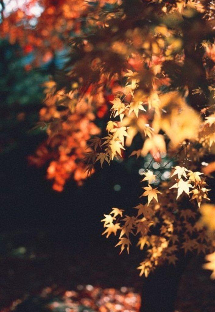 نور پاییزی