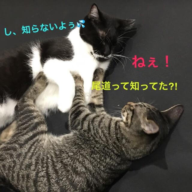 猫好きは行くべき!猫のパワースポットin尾道。猫さがしの旅