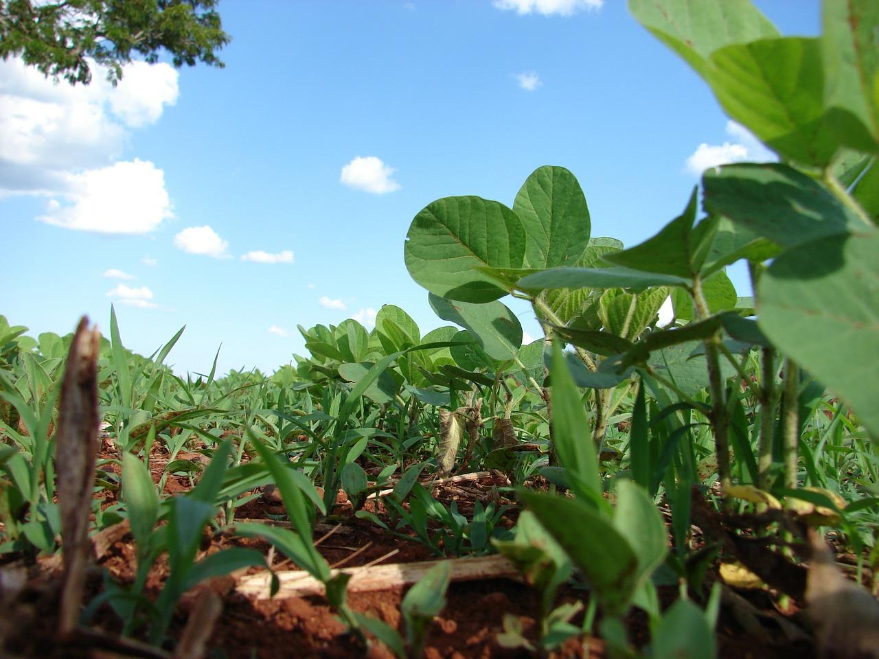 Expectativa de baixo impacto na venda de soja