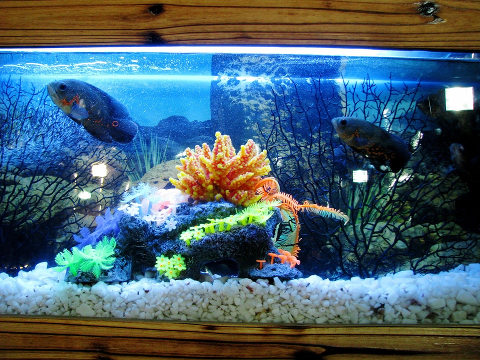 Your First Aquarium: How to Get Started