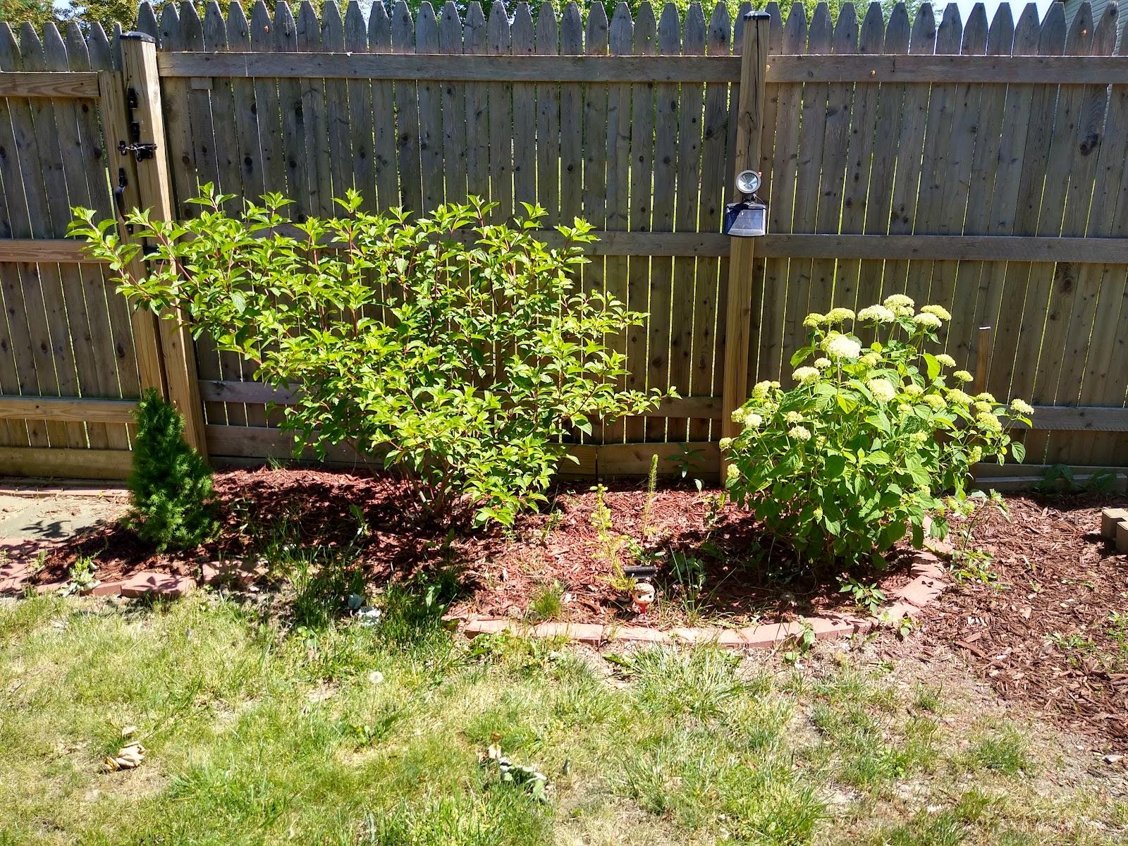 blanche devereaux garden picture