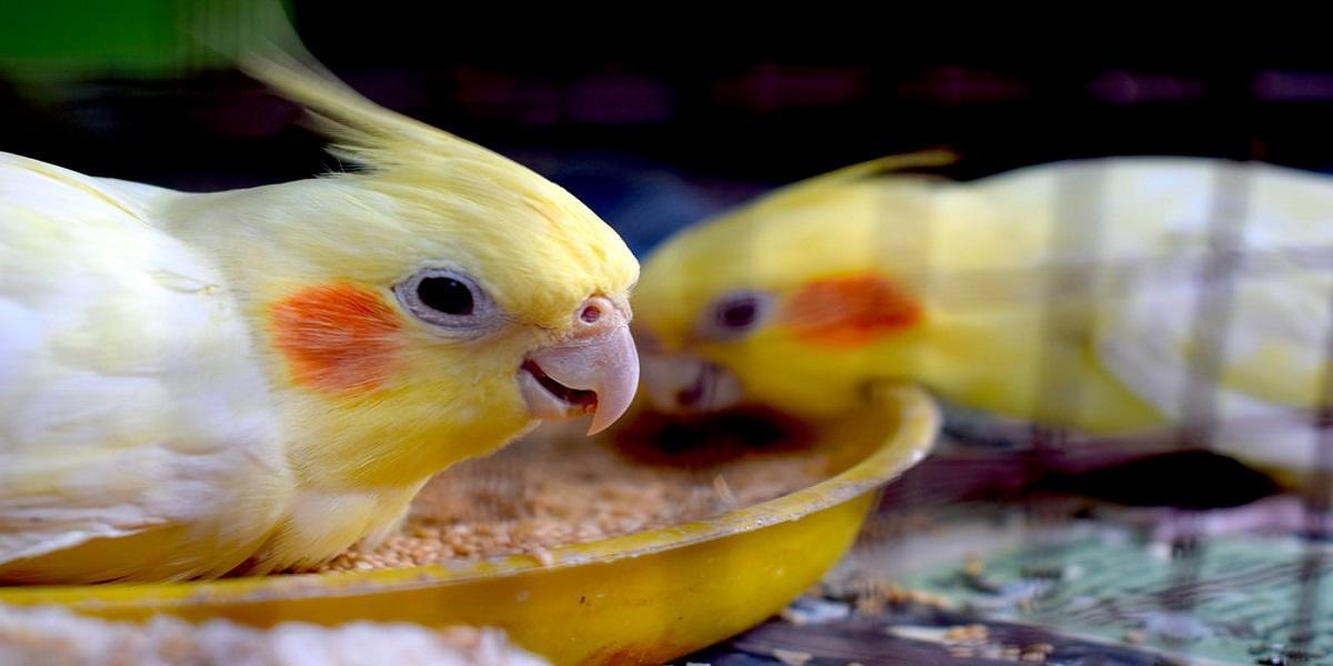 Pássaro colorido em cima  Descrição gerada automaticamente