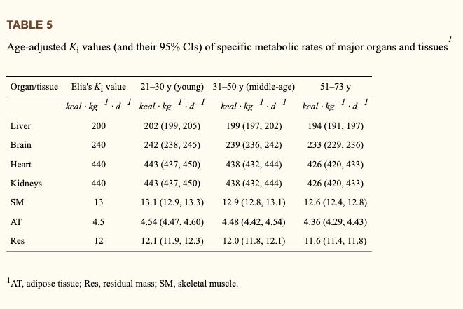 metabolic rates of different bodily tissues