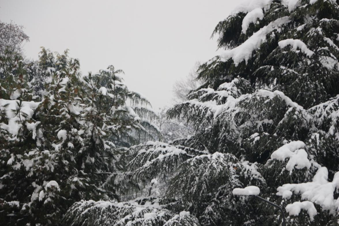 Une image contenant extérieur, arbre, ciel, neige  Description générée automatiquement