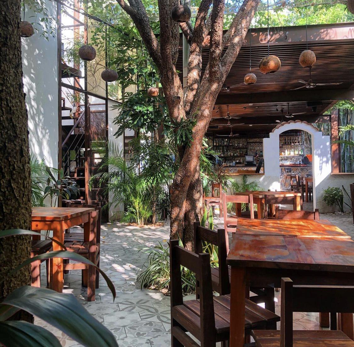 Cafeterías en Mérida, Yucatán