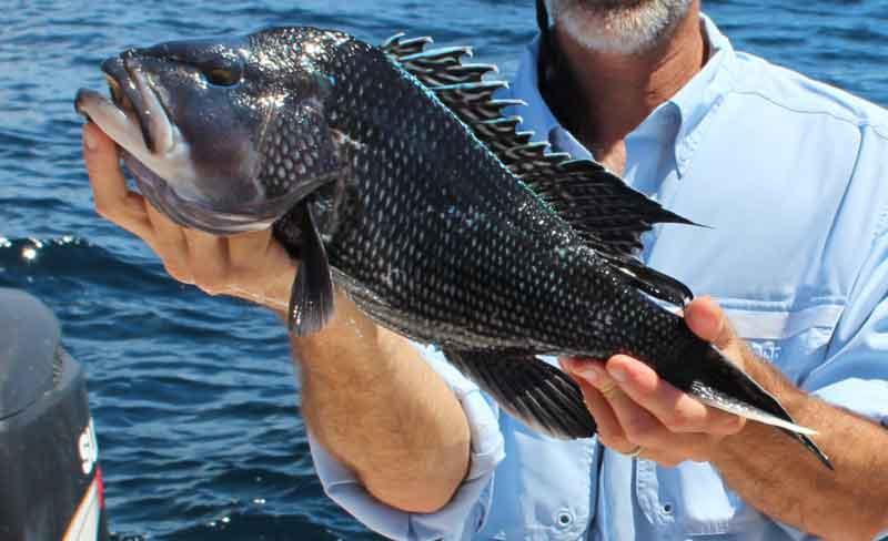 Fishing for Beginners: How to Fish for Black Sea Bass | FishTalk Magazine