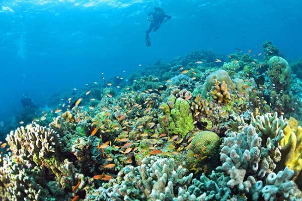 دنیای زیر آب مالزی
