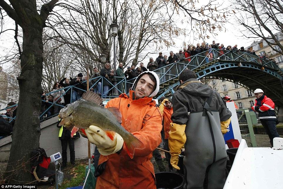 驕傲的時刻:一名工人展示了一條從Saint-Martin運河上取下的大魚,正在經歷一場戲劇性的改造