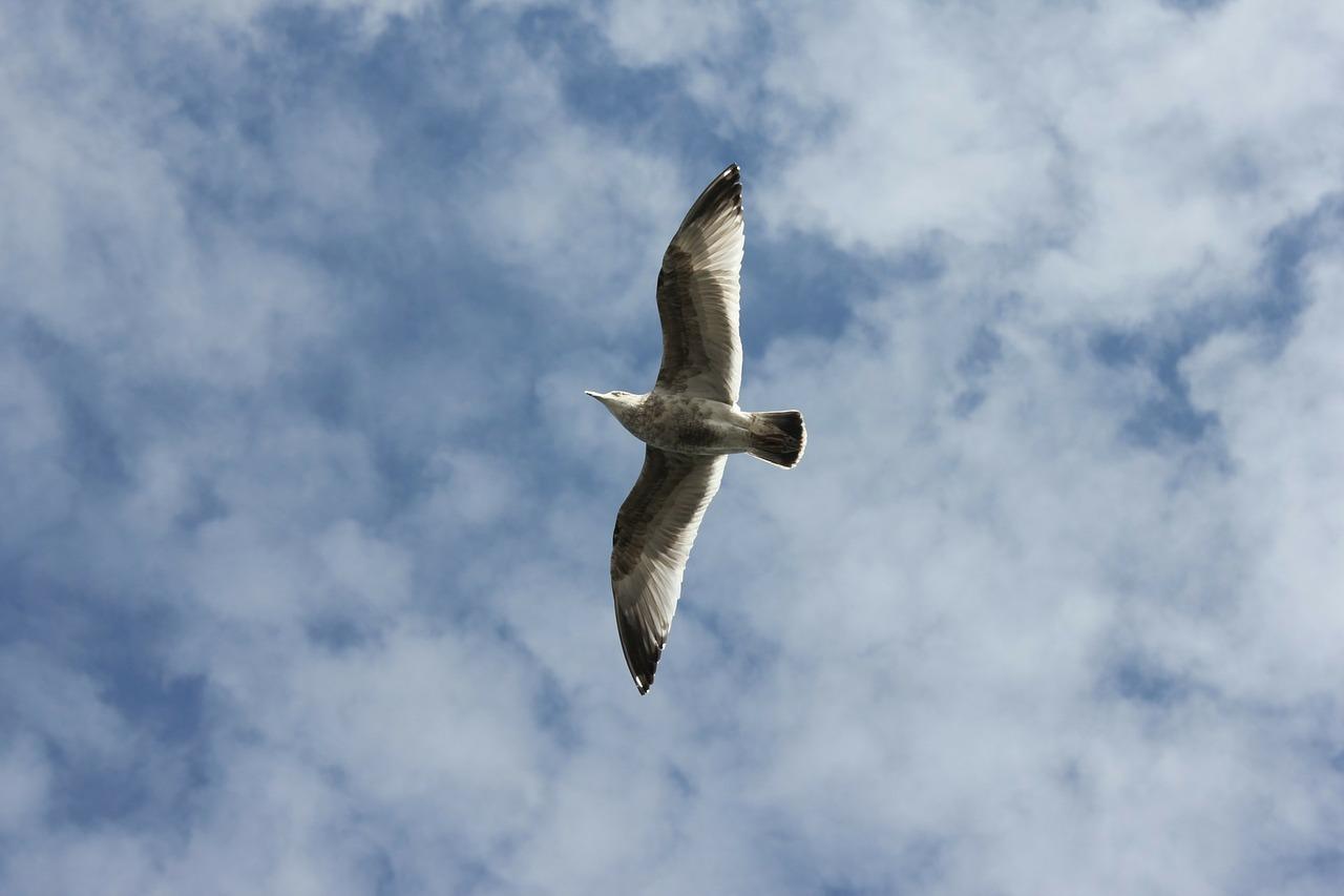 war dove.jpg
