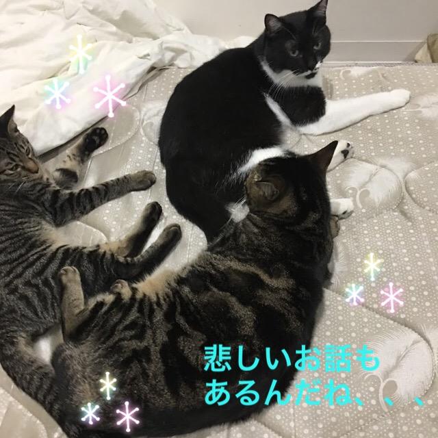 猫の育児放棄の対策と原因について。母猫が子猫を食べる理由