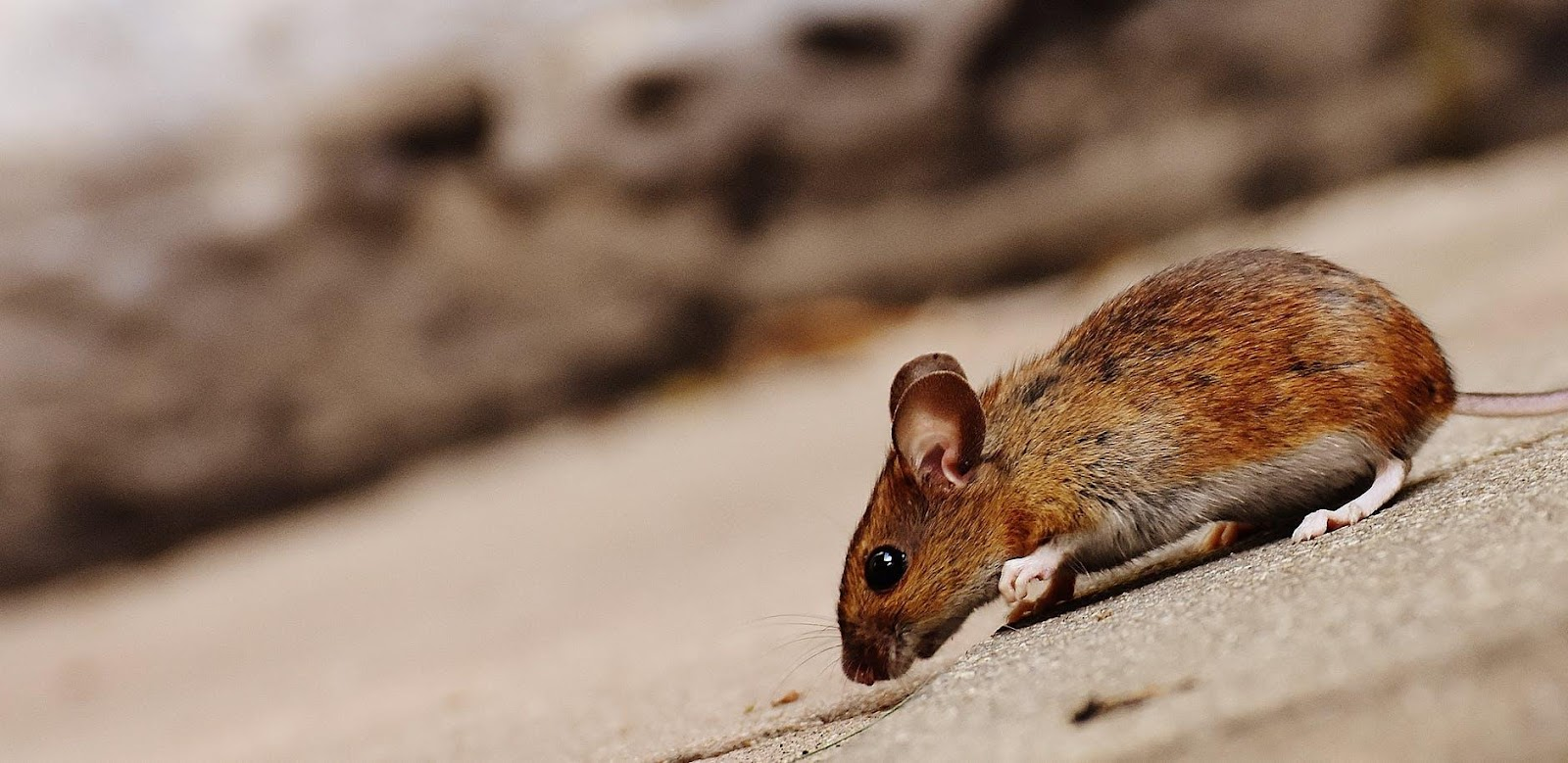Reducing the risks of rodenticides