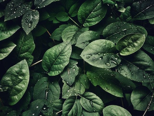 Image by Sohail Na via Pexels