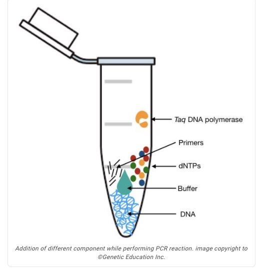 PCR reaction in a PCR tube.
