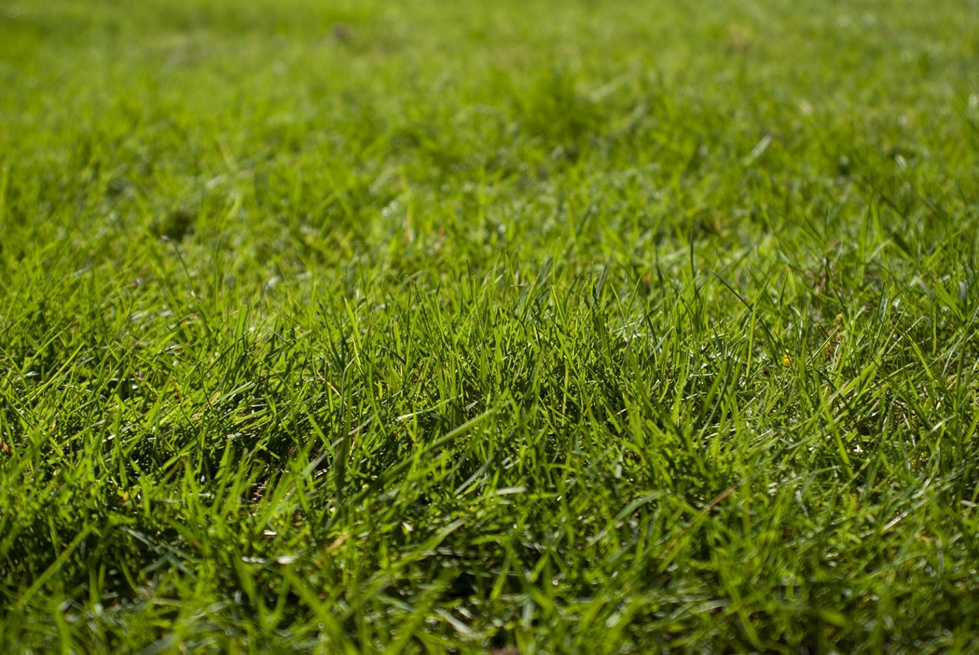 growing a lawn from grass seed