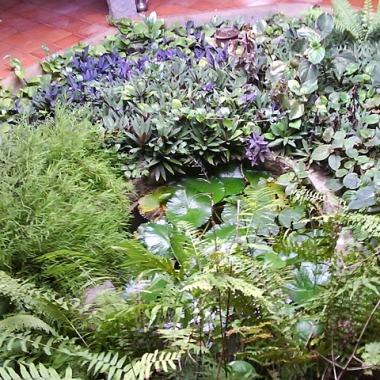 Indoor pond at Dr.