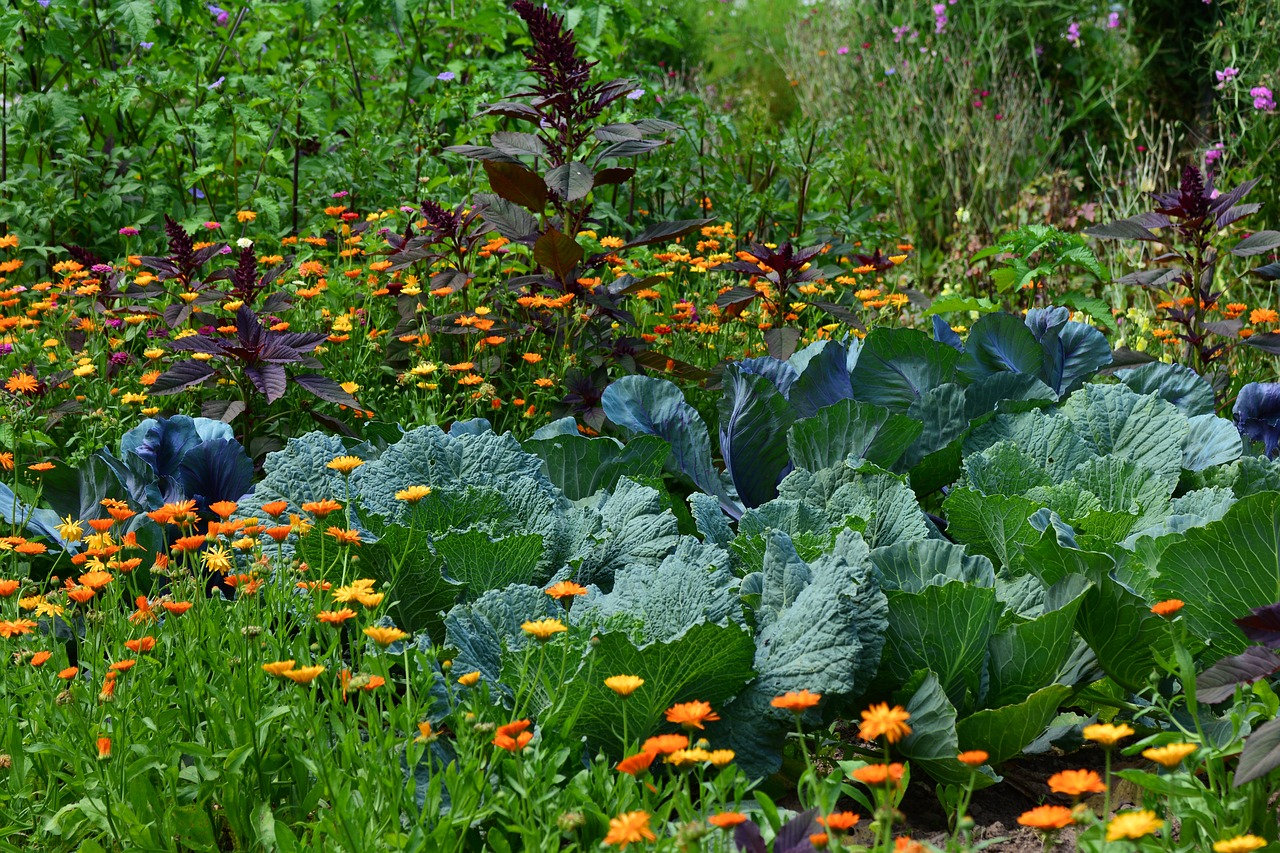 Companion Planting results in beautiful displays of leafy greens and colourful flowers