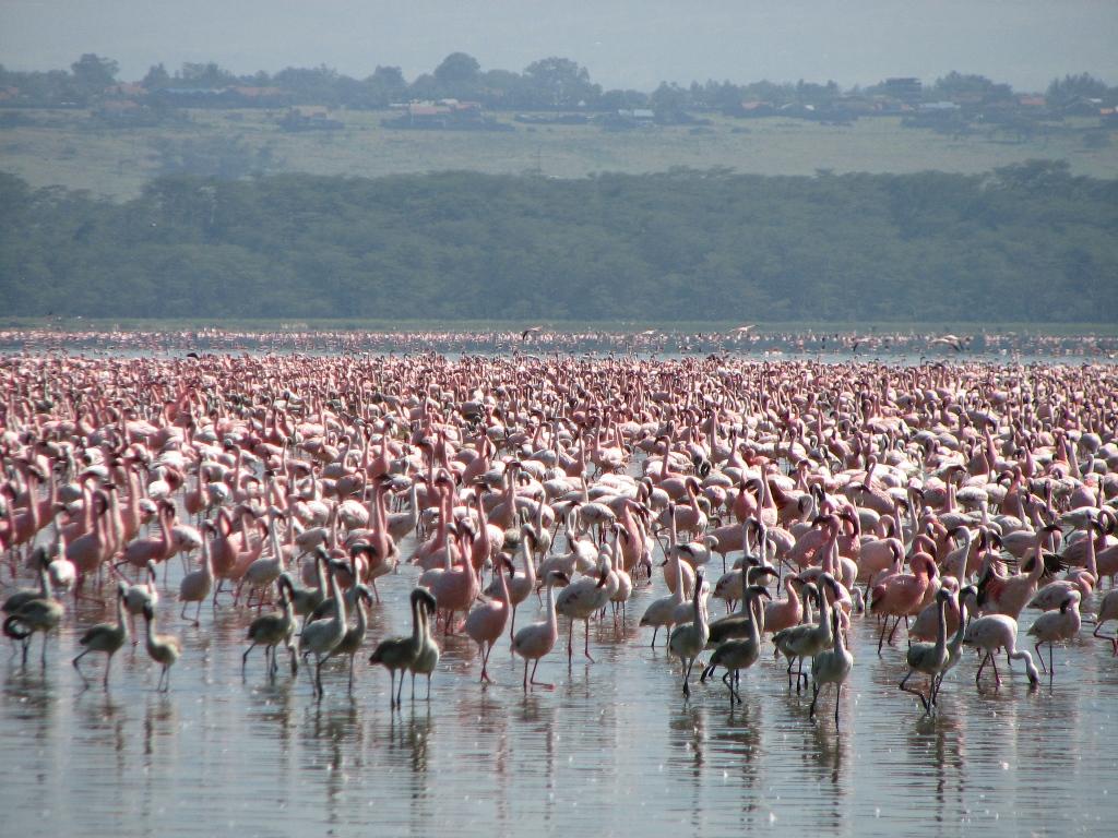 Lake-Manyara-National-Park.jpg