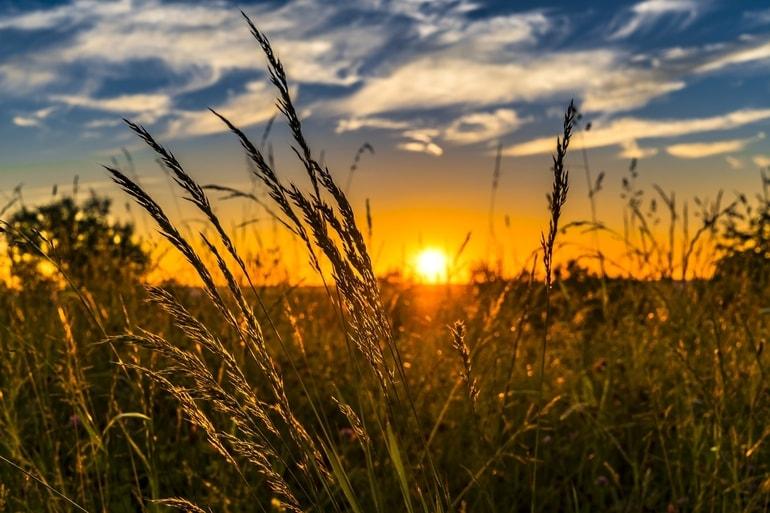 Por do sol em um campo de trigo